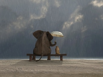 elephant and dog on a bench in the rain without rainjackets