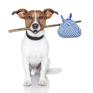 dog with hobo stick